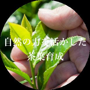 自然の力を活かした 茶葉育成