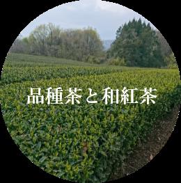 品種茶と和紅茶
